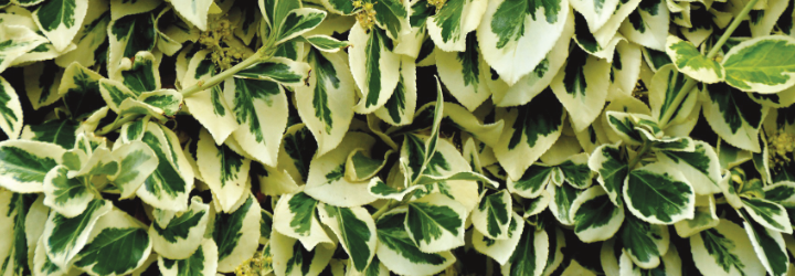 leaves-header